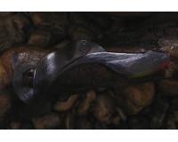 Приманка силиконовая ORKA Русалка 45 мм, цвет SB